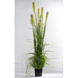 Gräserarrangement mit Rispe 180cm
